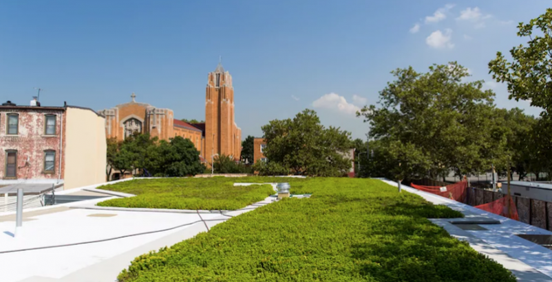 The green roof at the Windsor Terrace Library