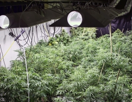 Bill aims to harmonize policy regarding federal, state marijuana laws