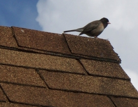 Asphalt roofing group publishes updated shingle installation guide