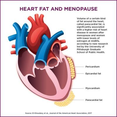 Hormone Therapy Linked to Heart Fat, Hard Arteries