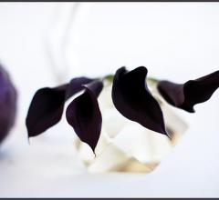 """""""Calla Lillies with Cabbage"""""""
