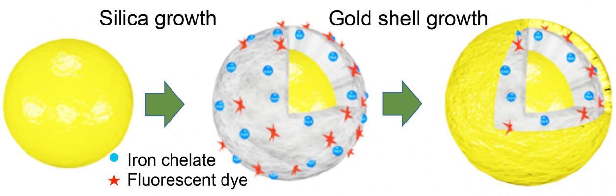 Iron Outperforms Gadolinium as MRI Contrast Agent