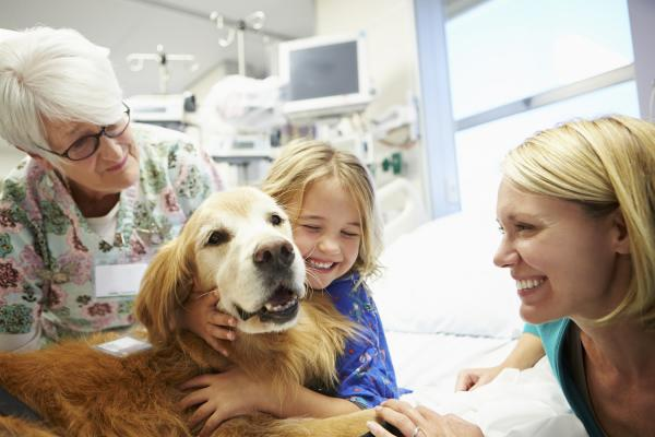 New Study to Examine Therapy Dog Impact on Pediatric