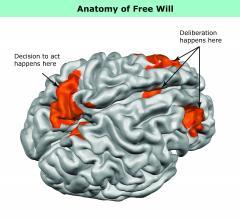 MRI, brain activity
