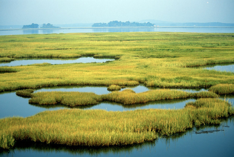 Coastal wetlands may see big changes as federal wetlands regulations are revised by the Trump administration.