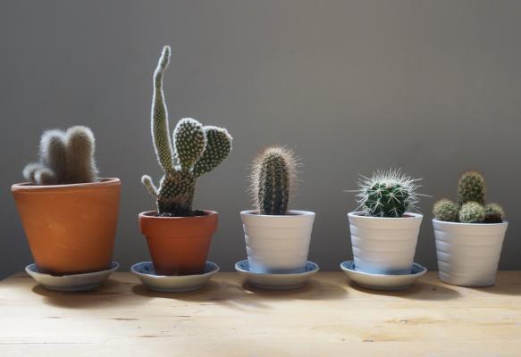 Small cactus Pexels