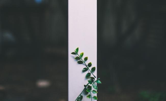 Vine crawling up post