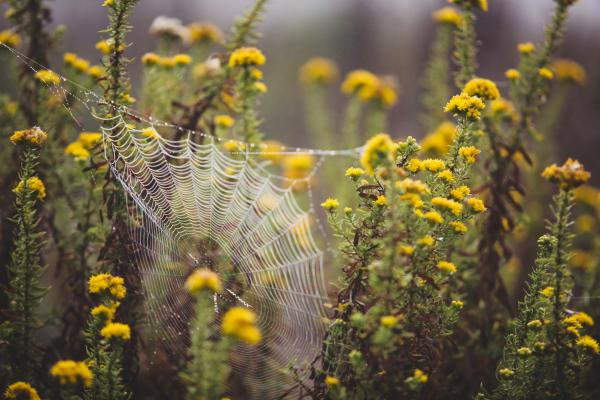 Flowers with a spider's web
