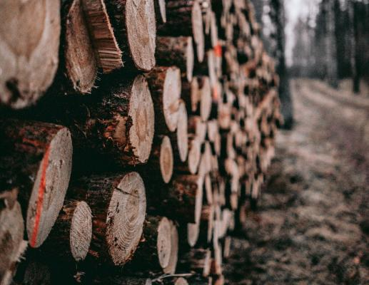 Lumber prices posted a 25 percent increase in January 2019, but analysts warn that the market may be overbought, and conditions are similar to last year when prices hit an all-time high and then fell.