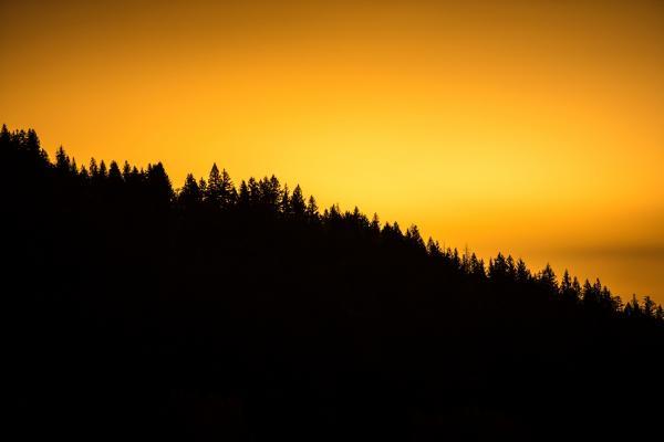 Treeline against yellow sky
