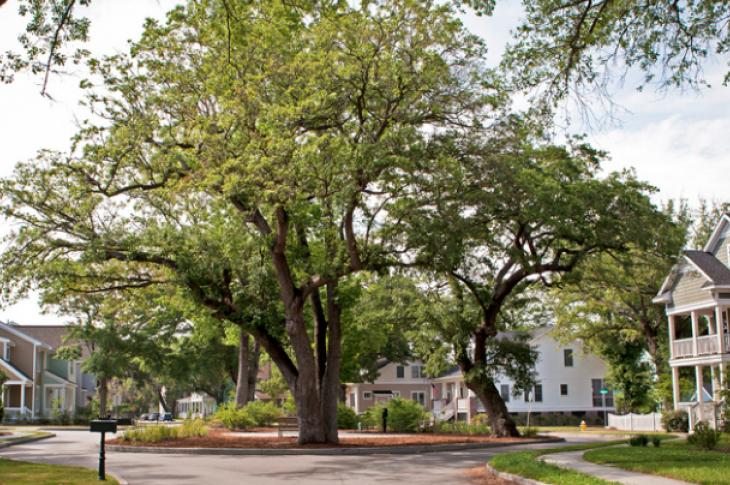 Pocket park in North Charleston, Oak Terrace Preserve
