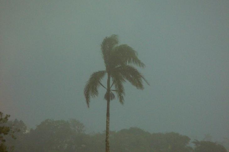 Palm-tree_in_a_ storm