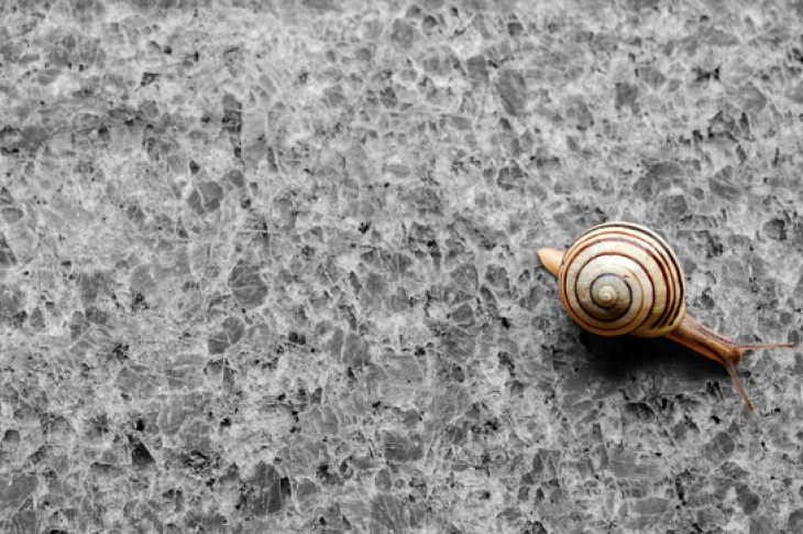 Granite countertop with tiny house on the move—a snail