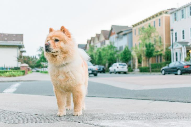 Dog on residential street | National home builder D.R. Horton is looking forward to spring, one of the hottest times of year for real estate, following the demand slowdown at the end of 2018 and starting 2019.