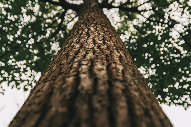tree trunk wood