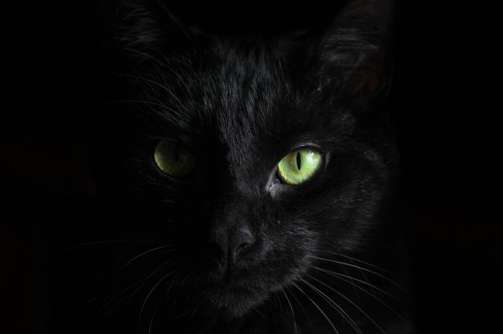 black cat against black background
