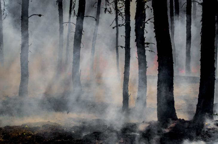 Michael Tachovsky, an economics expert and consultant in real estate damage atLandmark Research Group, is weighing in on how the real estate industry can minimize future wildfire risk.
