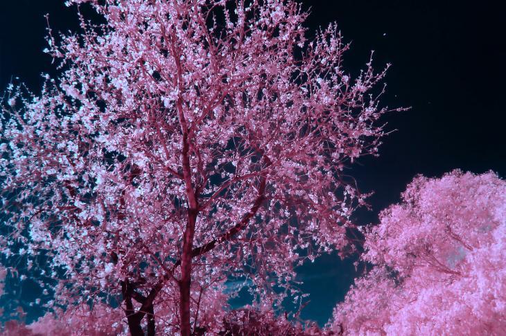 Tree in the nighttime