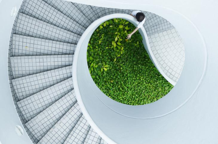 Staircase with green plantings