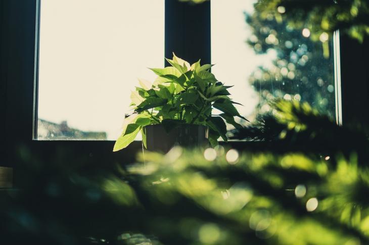 Greenery by the window