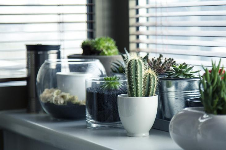 plants on kitchen counter