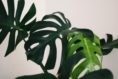plant leave