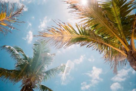 palm trees in Florida-Rinehart Homes, in Manatee County, Fla., shifts to building affordable homes