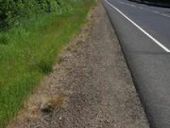 Managing plant growth in right-of-ways helps promote driver safety and roadside aesthetics