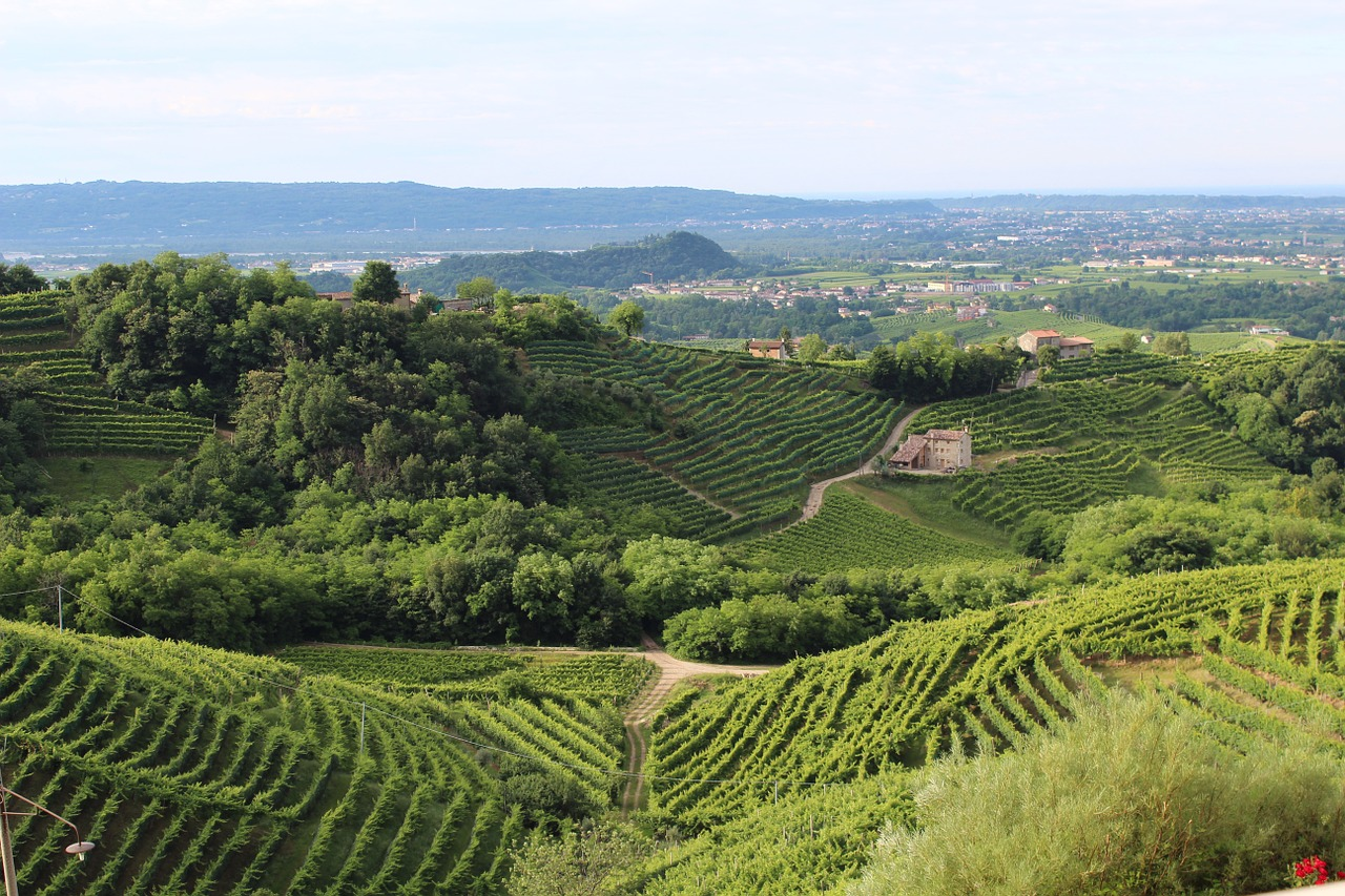 The study found prosecco vineyards are responsible for up to 75% of soil erosion in the region