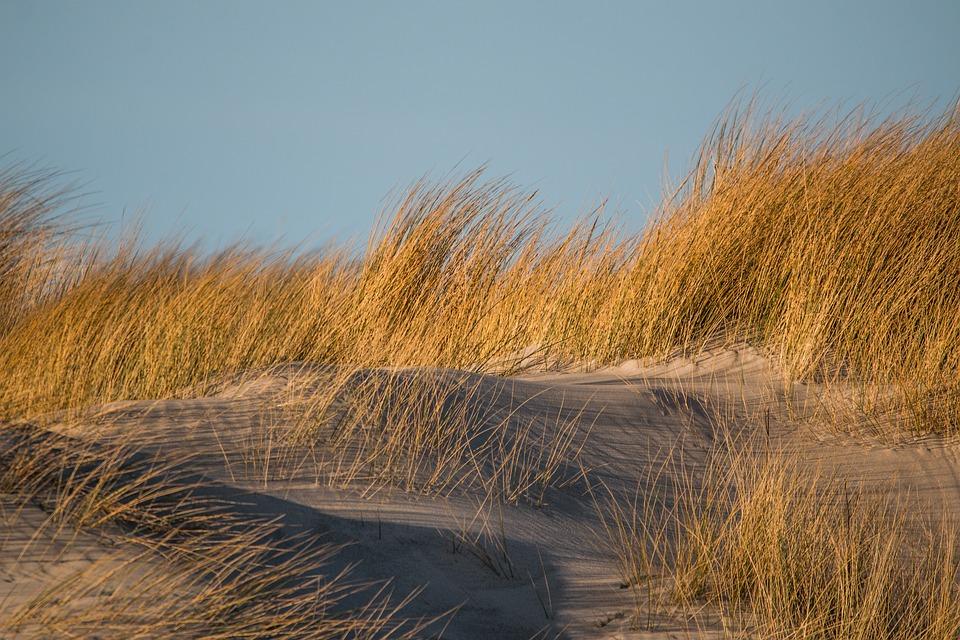 Texas embarks on erosion control dune restoration