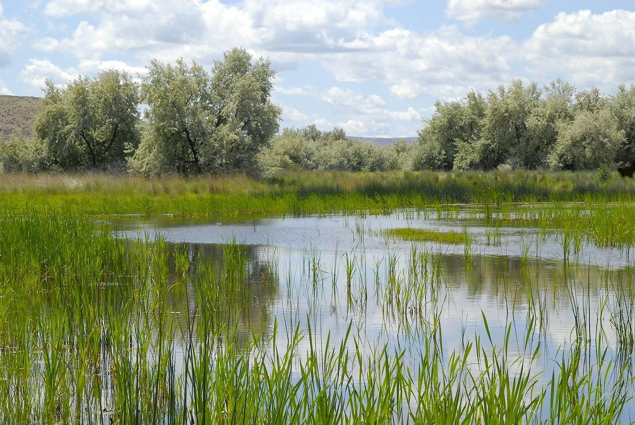 Wetland restoration to improve storm water runoff in Lake Erie