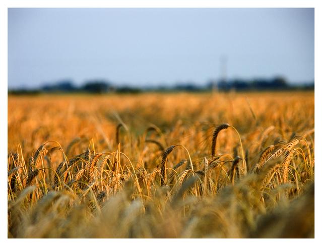 Farm, agriculture