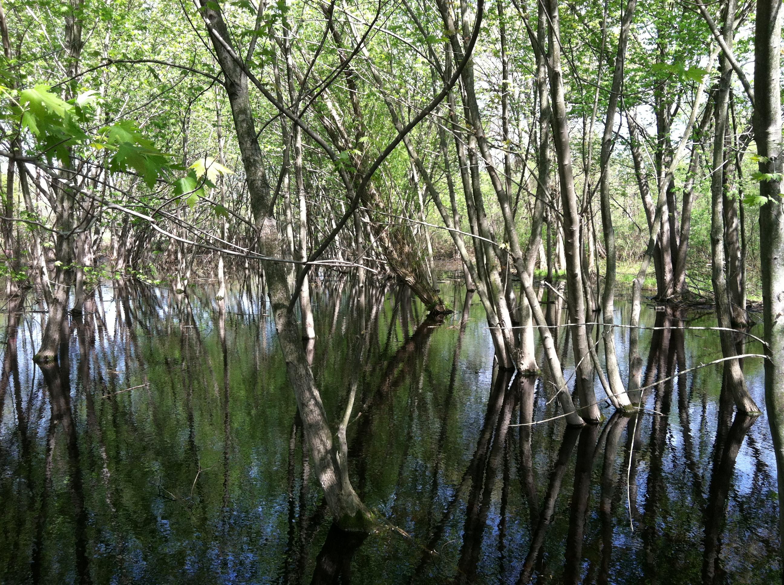 chicago wetland, floodplain, nature