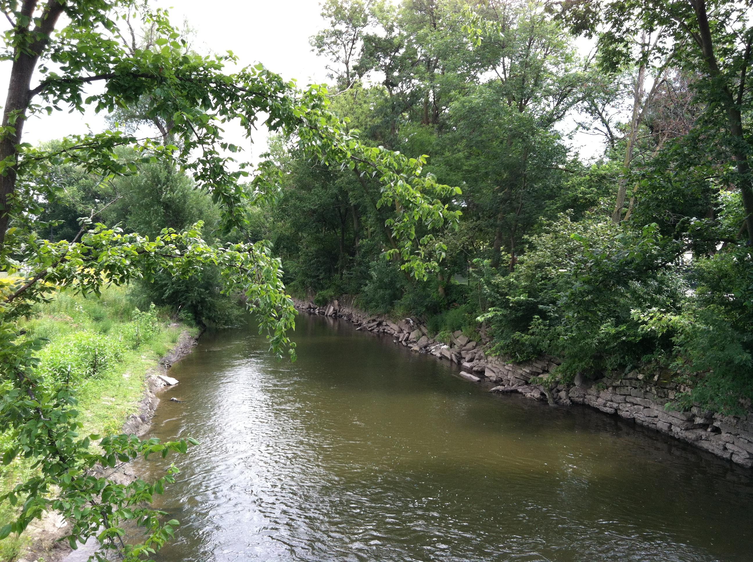 chicago, chicago river, chicago wetland, wetland