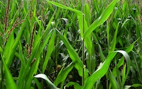 Profile topsoil alternative vegetation ProGanics biotic soil media