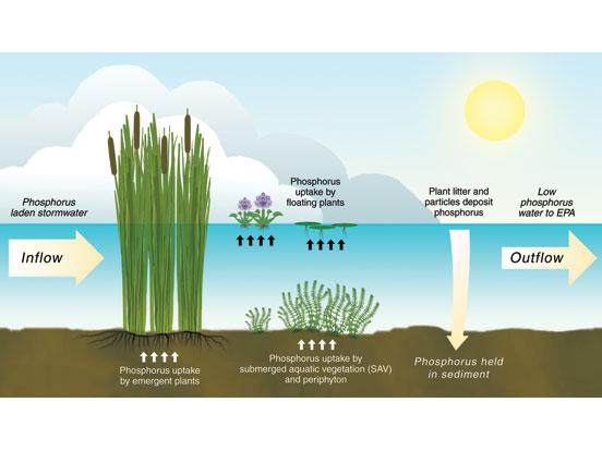 Florida Everglades South Florida Water Management District
