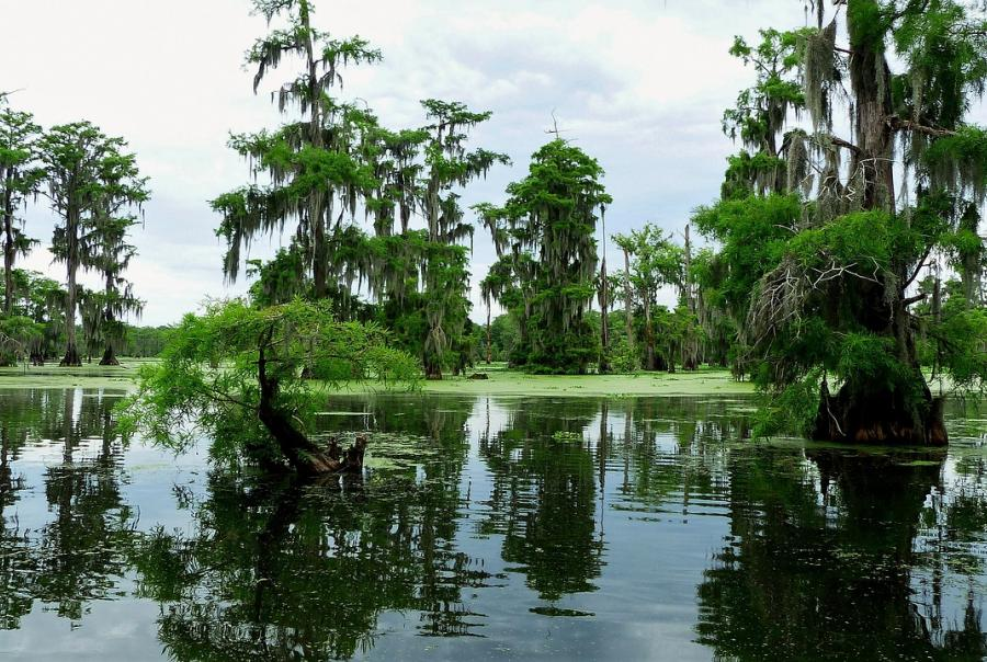Wetland restoration project completed in Louisiana