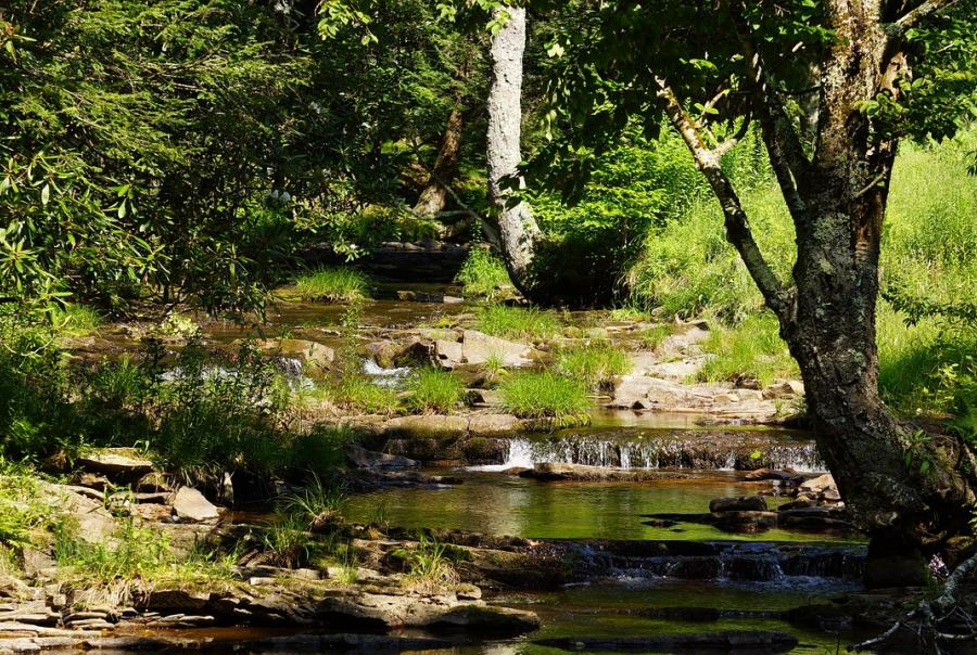 West Virginia University receives funds to study wetlands and storm water benefits