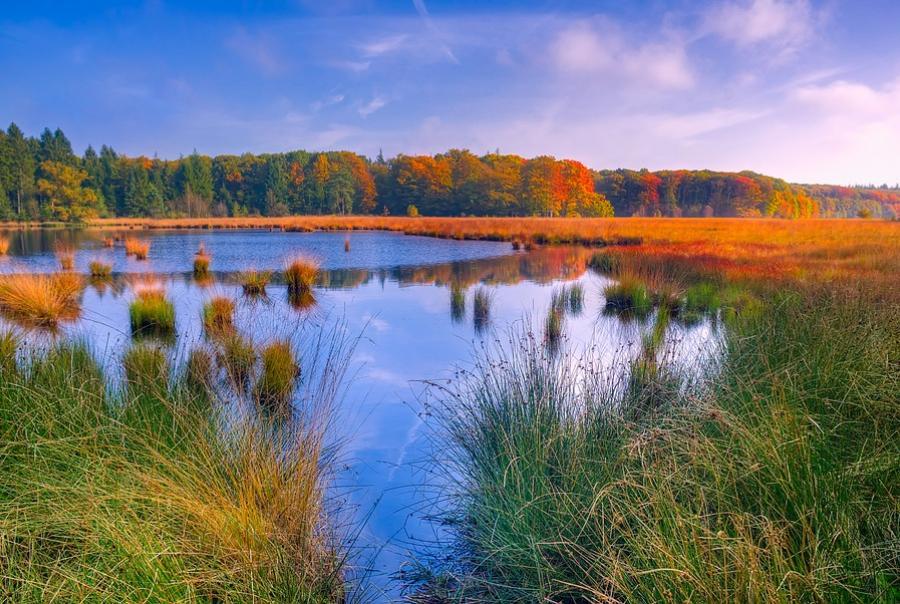 EPA funds California wetland restoration