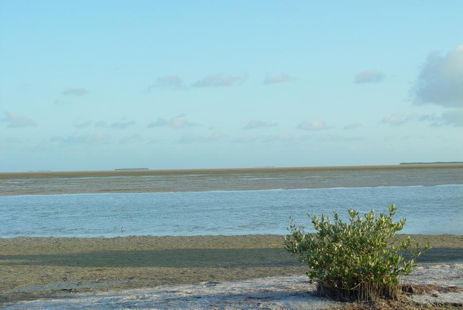 gulf of mexico, coast, ecosystem, restoration, comprehensive plan, 2017, update