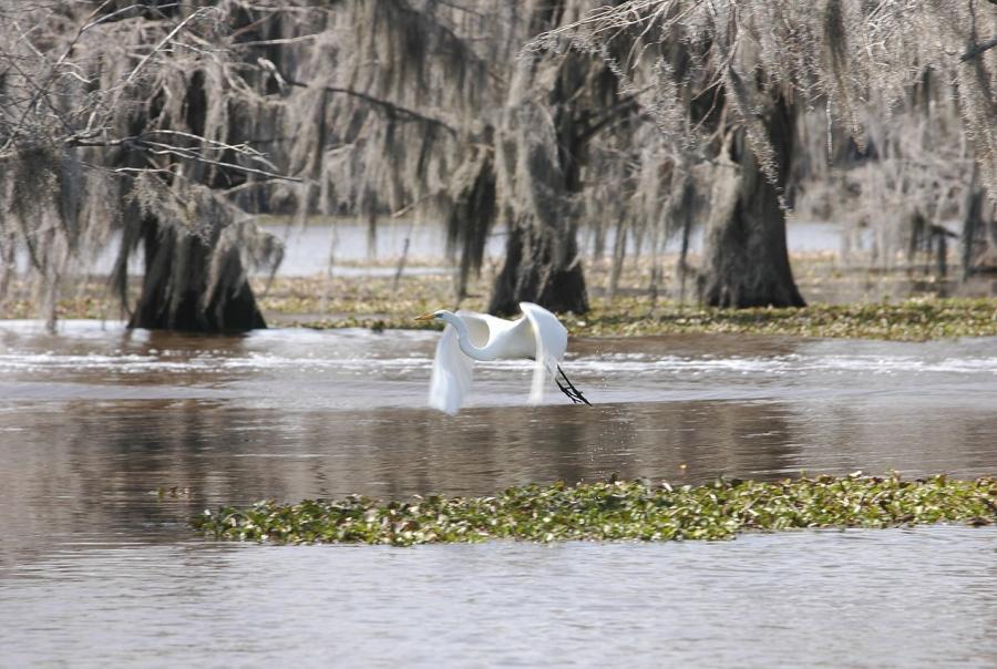 New ecolodge raises awareness of wetlands protection
