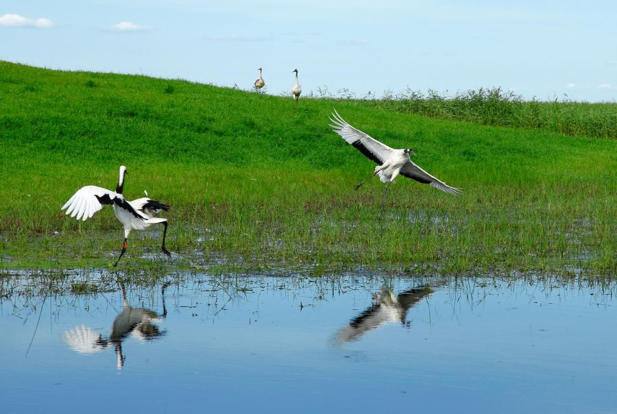 EPA awards funds for wetland improvement in Colorado