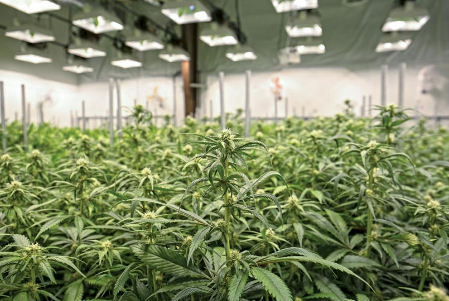 Storm water compliance in cannabis cultivation