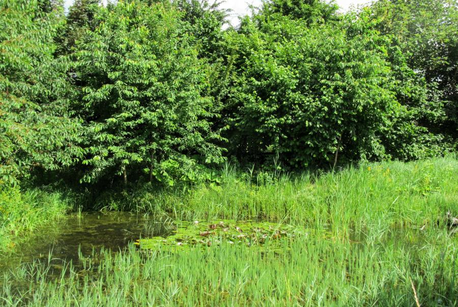 EPA Central Valley Wetlands Tehama County California Settlement