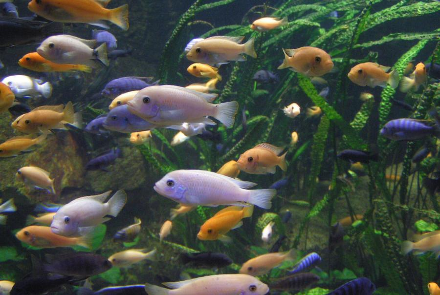 EPA Standards Aquatic Life Cooling Water Intakes Clean Water Act