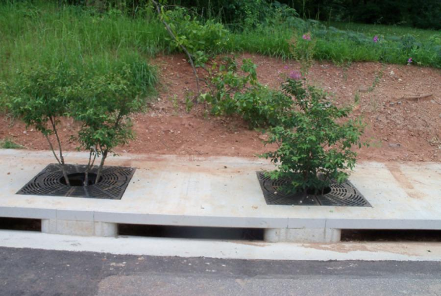 Georgia city plants trees, grows business park