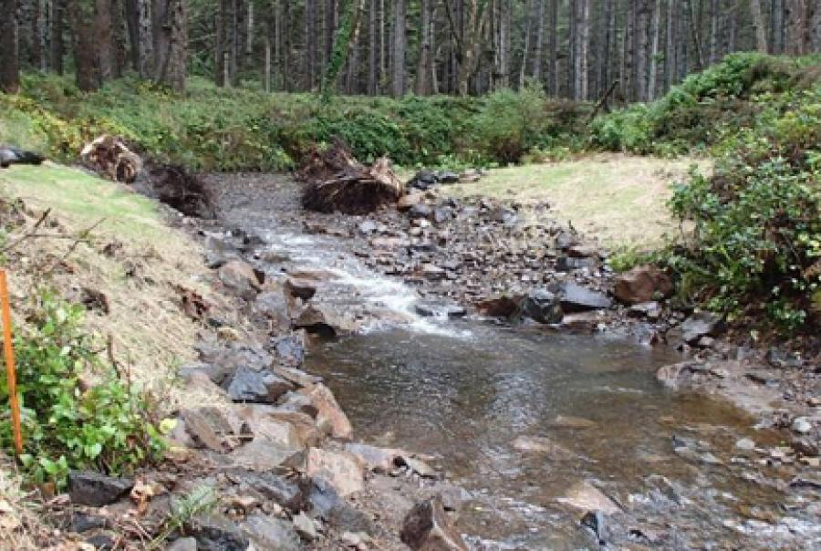 Natural filtration helps Oregon city enhance water quality