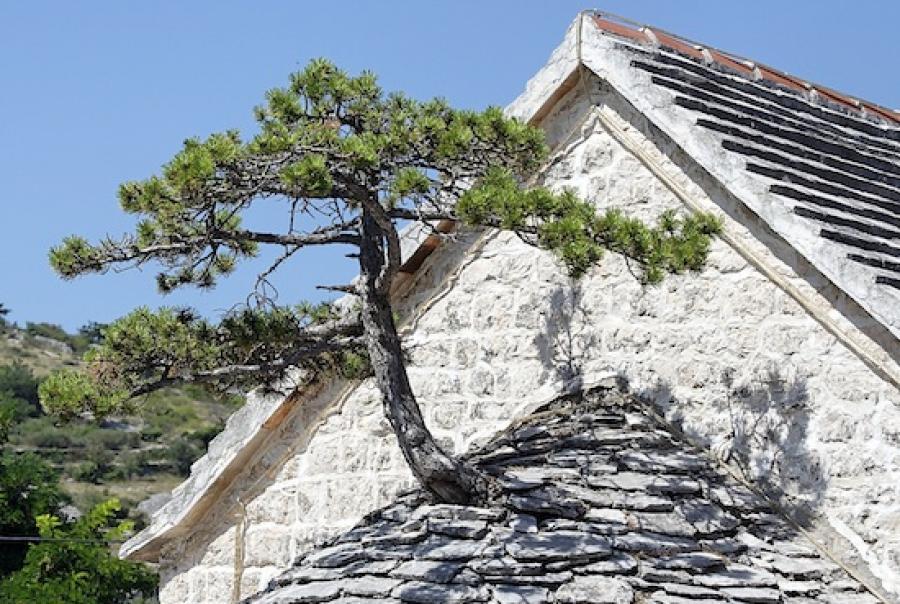 green roofs, rainwater harvesting