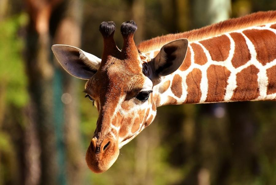 A new storm water filtration system will help the Denver Zoo save $40,000 per year