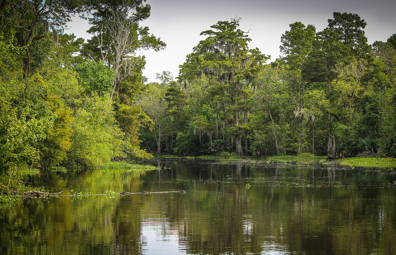 Louisiana task form targets water quality reform